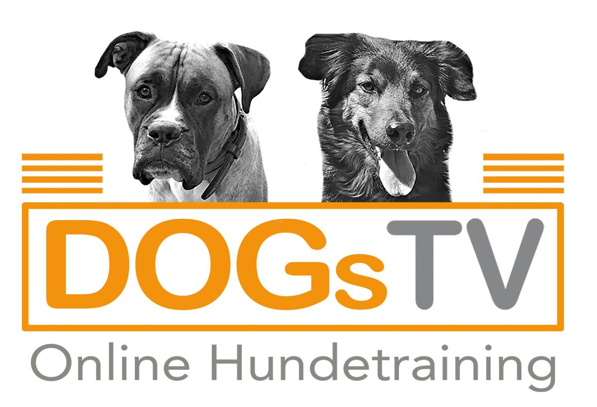 Dogs TV